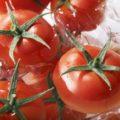 富山県の小さな農園で、深層水トマトを発見!