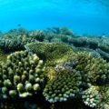 「海水魚、珊瑚の飼育ができない。」そんな悩みを克服する天然アイテム   生麦海水魚センター